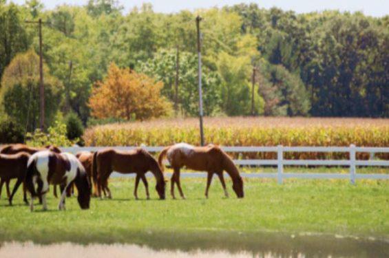 Ellis-House-Horses